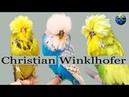 PARAKEET MUHABBET Christian Winklhofer Germany 2019 🌍Budgie Planet 多嘴的人