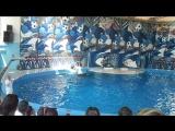 SAM_4875 сочинский дельфинарий. часть 2