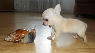 AWW CUTE BABY ANIMALS Videos Compilation Funniest and cutest moments of animals - Soo Cute kiki #10
