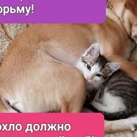 Личная фотография Ольги Хархуновой