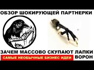 Для чего продавцы скупают лапки Ворон И как превратить 2 лапки в 11000 руб  не истребляя птиц
