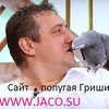 Popugay Grigory