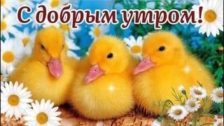 С Добрым Утром! 🌺По Жизни Плыть Всегда С Улыбкой! 🌼Музыкальная Открытка Пожелание!